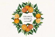 Orange Wedding Invitations, Wedding Invitation Kits, New Clip, Frame Clipart, Frame Wreath, Printable Wall Art, Frames, Citrus Fruits, Clip Art