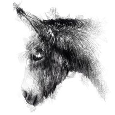 Unique drawings & sketches from artist Sean Briggs by SketchyLife Animal Sketches, Animal Drawings, Drawing Sketches, Pencil Drawings, Art Drawings, Sketching, Donkey Drawing, Caran D'ache, Fine Art Drawing