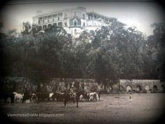 En las cercanías del castillo, bosque y acueducto de Chapultepec las vacas pastaban.