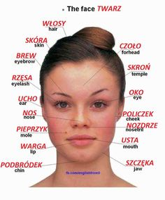 Polish vocabulary - Twarz / The face