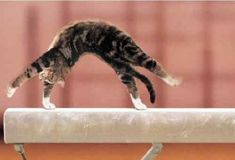 20 Amazingly Flexible Cats Who Are Laughing In The Face Of Gravity