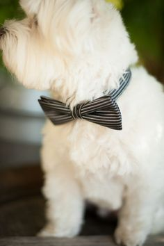 What a handsome ring bearer-- loving the bow tie. {Rennard Photography}