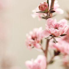http://www.flickr.com/photos/thecheshiresmile/page1/ - у этой девушки куча потрясающих фотографий (атмосферы,цветы..)
