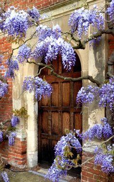 Красивые Цветы, Красивые Места, Старые Двери, Старые Деревянные Двери, Винтажные Окна, Старинная Архитектура, Цветущие Лозы, Декоративные Окна, Деревенские Двери