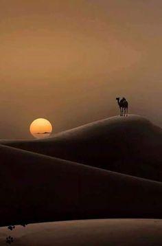 "coisasdetere: ""Natura sun rise… ""                                                                                                                                                                                 More"