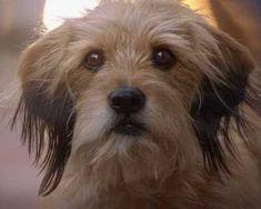 Netflix Benji Movie Brings Back The Beloved Dog Ewcom Netflix Original Movies, Netflix Movies To Watch, Netflix Series, Series Movies, Studio Ghibli, Netflix Originals, The Originals, Great Movies To Watch, Netflix Releases