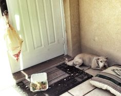 This dog who realized it was only a salad: | 21 Dogs Who Made Poor Life Choices