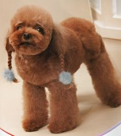 Huxtable The Poodle | Toy Poodle Blog | Parti Poodle: Japanese Style: Poodle Clips & Cuts Grooming