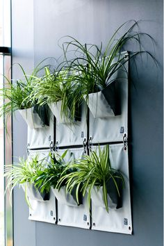 Such a striking interior wall feature! The Green Pockets® hanging planters can be used inside and out. One at a time or combined to create a really fabulous wall hanging. Plant Bags, Garden Bags, Interior Walls, Hanging Planters, North America, Artisan, Bloom, Pockets, Create