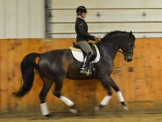 Beautiful 2004 Oldenburg gelding with three lovely gaits that are easy to sit. Shown 2nd level in 2012 scoring in the high 60's and low 70's. Powerful presence and judges love him! Schooling 3rd with changes started. Wonderful horse for AA or Junior! $68,000