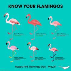 I love flamingos. My sister Know your flamingos Flamingo Party, Flamingo Decor, Flamingo Birthday, Flamingo Bird, Flamingo Print, Greater Flamingo, Pink Bird, Pink Flamingos Birds, My Spirit Animal