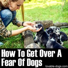 How To Get Over A Fear Of Dogs►►http://lovable-dogs.com/how-to-get-over-a-fear-of-dogs/?i=p