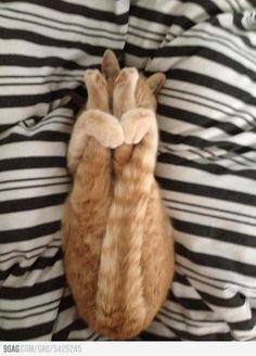 Advanced cat yoga: Supta Paschimottanasana