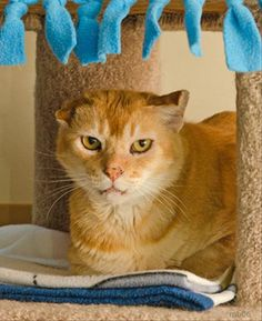 Bret the cat is looking for a gentle, patient person to call his own.