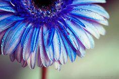 INDIGO BLUE by Charo  Arroyo