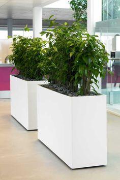 mother in law/snake plant room divider. love the massive big pots