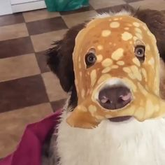 No one cared who I was until I put on the mask - Tiere - Perros Graciosos Funny Animal Memes, Funny Animal Videos, Dog Memes, Cute Funny Animals, Funny Animal Pictures, Cute Baby Animals, Funny Cute, Funny Dogs, Animals And Pets