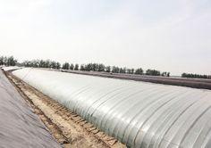 Plastic Film Greenhouse Greenhouse Film, Plastic Film, Energy Efficiency, Energy Conservation