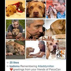 Remembering Daddy. Thank you @Karina Garcia Artica! #daddymillan