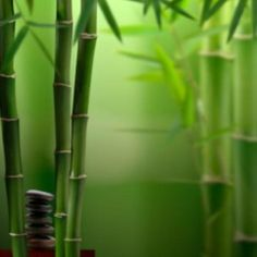 How is rayon made from bamboo? Bamboo based rayon fabrics are made by taking cellulose from bamboo stalks and grinding it to a wood pulp. Feng Shui, Bamboo Background, Deco Zen, Bamboo Stalks, Bamboo Tree, Bamboo Plants, Zen Meditation, Aesthetic Colors, Green Nature