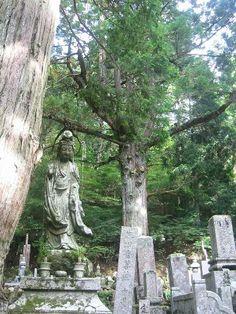 Mt. Koya  Okunoin Cemetery in Mount Koya, Japan