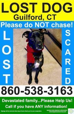 reunited 12/28  Buddha Dog Rescue & Recovery Liked · 1 hr ·    Guilford, CT - Please share for Caleb, 3 year old whippet/lab mix.