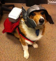 Super-heróis caninos: portal reúne imagens de cães fantasiados | Bhaz
