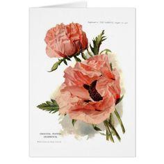 Shop Oriental Poppy (Papaver orientale) Postcard created by Botany_Boy. Botanical Tattoo, Botanical Prints, Papaver Orientale, Botanical Illustration, Illustration Art, Poppies Tattoo, Unisex, Custom Posters, Botany