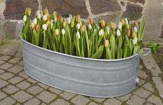 große ovale Zinkwanne, Wanne, Pflanzkübel, Hochbeet, Gartenteich, Blumenkasten | eBay
