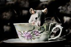 rats <3 tea time.