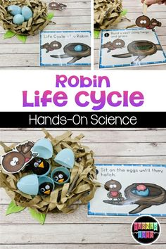 Act out the life cycle of a robin with this hands-on science activity for your spring preschool theme! for preschool for toddlers Science Activities For Toddlers, Spring Activities, Hands On Activities, Spring Preschool Theme, Sequencing Activities, Preschool Themes, Kindergarten Lessons, Art Lessons Elementary, Bird Life Cycle