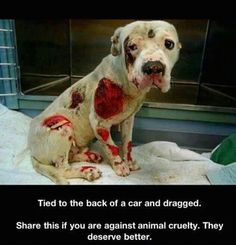 I love dogs and I am 100 percent against animal cruelty poor dog Love My Dog, Love Dogs, Cane Corso, Chien Golden Retriever, Mon Combat, Animals And Pets, Cute Animals, Pitbulls, Stop Animal Cruelty
