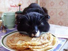 Cat and Pancake   Pancake Burglar Cat! STEALING PANCAKES!