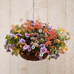 Create a Mound of Color See the difference accent colors make? This container uses some of the same plants as the last one, but the warm, glowing shades create a completely different look. This exciting combo is well suited to a spot where you entertain (like a deck or patio) because of its energizing colors. A. Petunia 'Supertunia Priscilla' -- 2 B. Verbena 'Aztec Silver Magic' -- 2 C. Calibrachoa 'Starlette Yellow' -- 2 D. Diascia 'Diamonte Apricot' -- 2