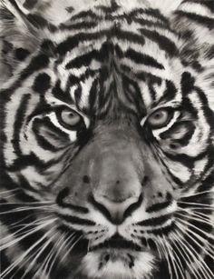 Study for Tiger Head (No. 1B)Robert Longo