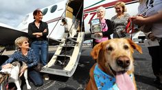 Volunteer pilots give dogs a second chance.