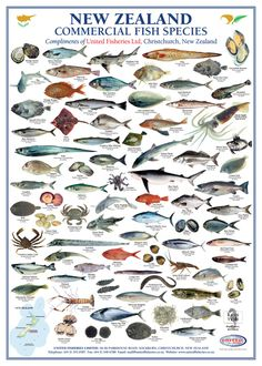 Downloadable - New Zealand Commercial Fish Species | United Fisheries