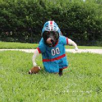 El mejor disfraz para un perro si eres un gran fan del fútbol americano