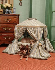 Louis XVI inspired pet bed - fit for a King or Queen or a Chihuahua who just knows what he/she deserves! Expensive Dogs, Dog Furniture, Dog Blanket, Pet Beds, Doggie Beds, Dog Houses, Pet Accessories, Cat Love, Cute Dogs