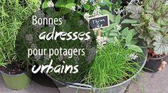Une liste de bonnes adresses et conseils pour acheter des plantes, des graines, des contenants et se procurer du substrat pour cultiver son potager en ville