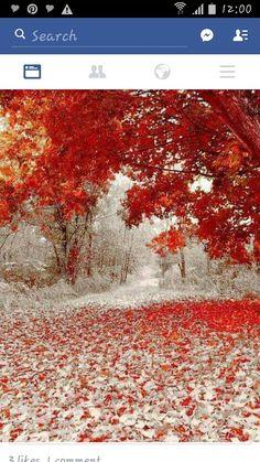 Autumn/Winter Mix