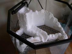 false bottom mantis enclosure! - Paludariums - Aquatic Plant Central