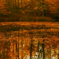Fall in Ohio. *Four Seasons Lake, Aurora, OH*