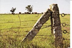"""Kansas limestone fence posts """"Land of the Post Rock"""" is a distinction given to about 3 million acres in North Central Kansas. Description from pinterest.com. I searched for this on bing.com/images"""