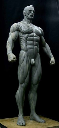 Jorge Soliz - male anatomy