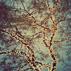 light up trees