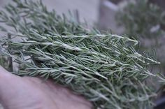 How to Make and Herb Topiary Using Rosemary