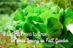 gardening crops cold weather fall spring, gardening, homesteading