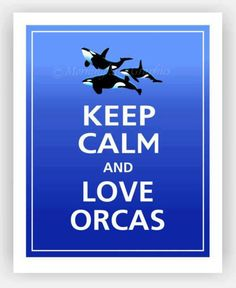 orcas... forever amazing