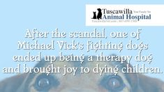 Interesting Pet Fact You Probably Never Knew - Enjoy! | Tuscawilla Animal Hospital has veterinarians that care about cats and dogs! Call us today to schedule an appointment. #veterinarian #veterinary Michael Vick, Veterinarians, Schedule, Dog Cat, Therapy, Facts, Dogs, Animals, Timeline